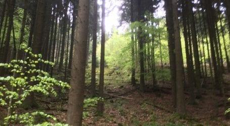 Wandern: Natur pur direkt vor der Haustür – der Naturpark Eifel